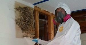 Mold Removal Technician Working On Infested Drywall